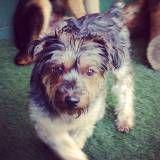 Valores de Daycare de cão  em Jandira