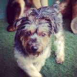 Valores de Daycare de cão  na Pedreira