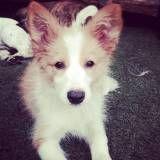 Valores de Daycare para cães em Moema