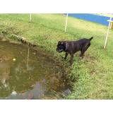 Valores de hotéis de cachorro em Santana de Parnaíba