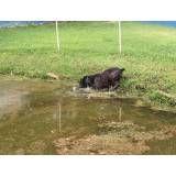Valores de hotéis de cachorros no Ipiranga