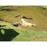 Valores de hotéis de cães na Cidade Jardim