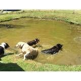Valores de hotéis de cão no Ipiranga