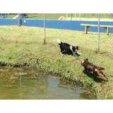 Valores de hotéis para cães no Ipiranga