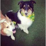 Valores de hoteizinhos de cachorro  em Barueri
