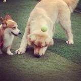 Valores de hoteizinhos de cachorros  no Jardim América