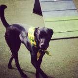 Valores de hoteizinhos de cães no Jockey Club