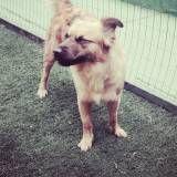Valores de hoteizinhos de cão no Socorro