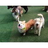 Valores de hoteizinhos para cachorro  no Jardim Bonfiglioli