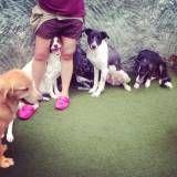 Valores de hoteizinhos para cachorros  no Jardim Bonfiglioli