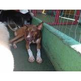 Valores de hoteizinhos para cães  em Santana de Parnaíba