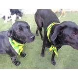 Valores de hoteizinhos para cão  no Jardim Bonfiglioli