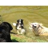 Valores de hotel de cães em Perdizes