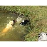 Valores de hotel de cão no Ipiranga