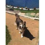 Valores de hotel para cachorro em Moema