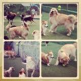 Valores de hotelzinho de cachorro no Jardim Paulistano