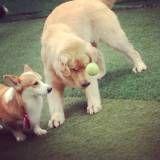 Valores de hotelzinho de cachorros  na Água Branca