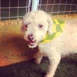 Valores de hotelzinho de cão  em Moema
