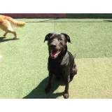 Valores de hotelzinho para cão  em Itapecerica da Serra