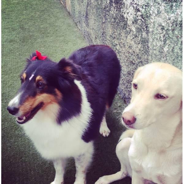 Valor Adestrador para Cão no Sacomã - Adestrador de Cãesno Brooklin