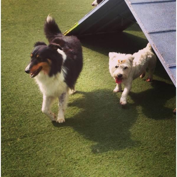 Valor de Adestrador para Cachorro em Santana de Parnaíba - Adestrador de Cãesno Brooklin