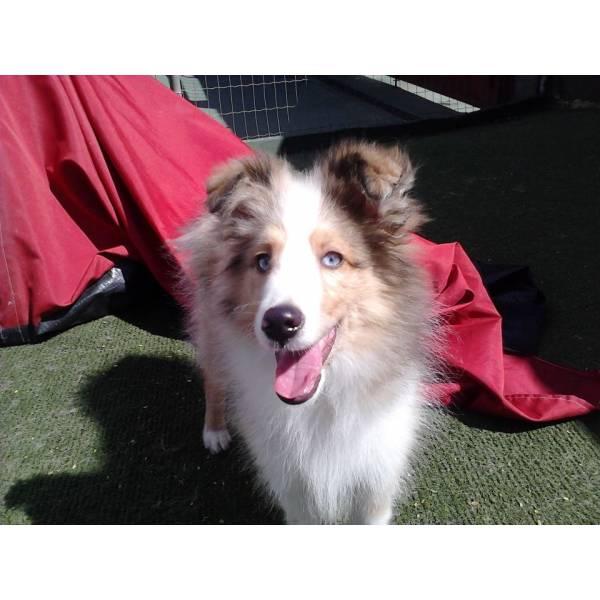 Valor de Adestrador para Cachorro na Cidade Jardim - Serviço de Adestrador de Cachorro Preço