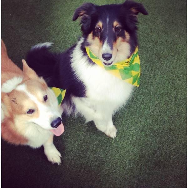Valor de Adestrador para Cachorro no Alto de Pinheiros - Adestrador de Cãesno Brooklin