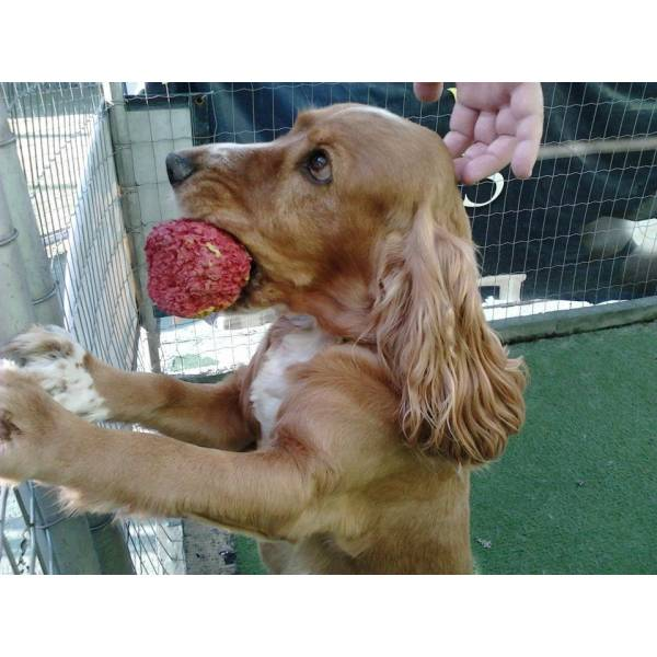 Valor de Adestrador para Cachorros na Água Branca - Serviço de Adestrador de Cães