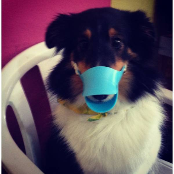 Valor de Adestrador para Cachorros no Jardim Bonfiglioli - Adestrador de Cãesno Brooklin