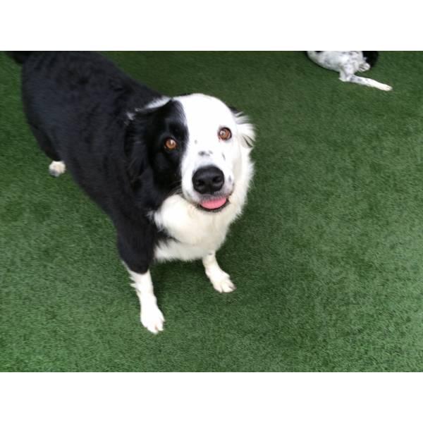 Valor de Adestrador para Cachorros no Jardim Paulistano - Adestrador de Cãesno Butantã