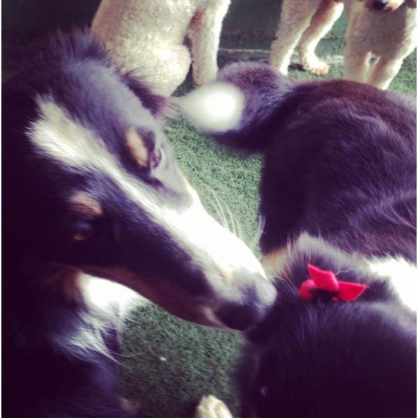 Valor de Adestrador para Cães no Butantã - Adestrador de Cãesno Brooklin