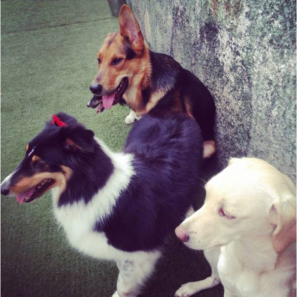 Valor de Adestrador para Cão na Lapa - Adestrador de Cãesno Brooklin