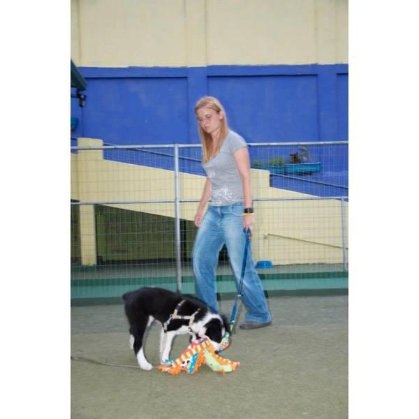 Valor de Adestrador para Cão no Jabaquara - Serviços de Adestradores de Cães
