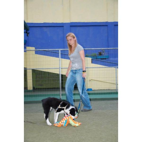 Valor de Adestrador para Cão no Jaguaré - Serviço de Adestrador de Cachorro Preço