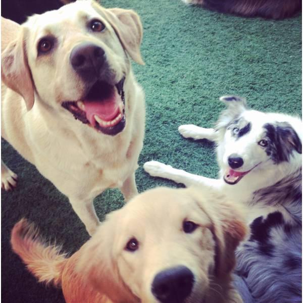 Valor de Adestradores de Cachorro na Cidade Jardim - Adestrador de Cãesno Butantã