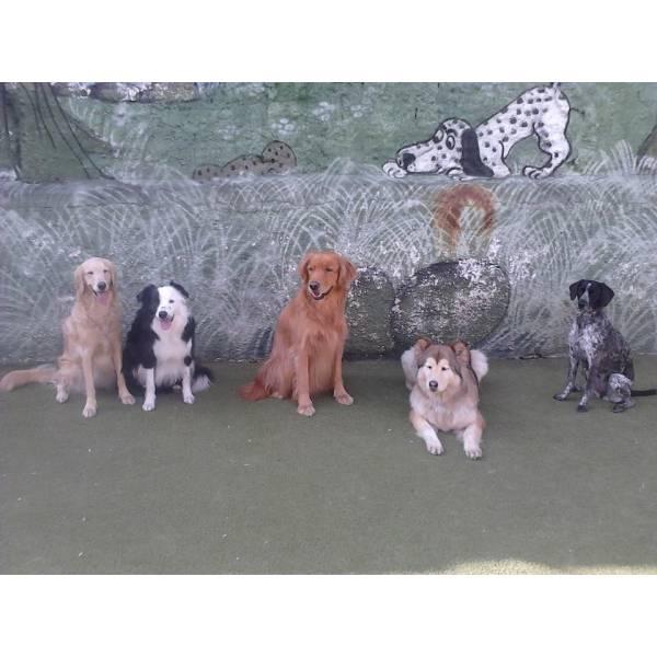 Valor de Adestradores de Cachorro no Butantã - Adestrador Profissional