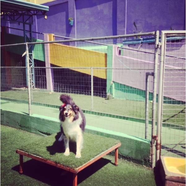 Valor de Adestradores para Cachorro em Sumaré - Adestradores de Cães