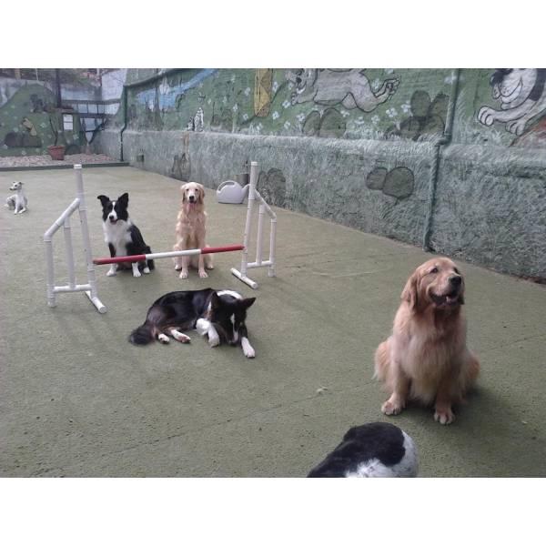 Valor de Adestradores para Cães no Jardim Europa - Adestrador de Cãesna Berrini