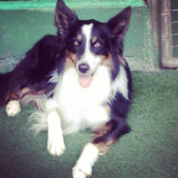 Valor de Adestradores para Cão no Butantã - Adestrador de Cãesno Brooklin