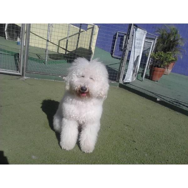 Valor de Adestradores para Cão no Jardins - Adestrador de Cãesem SP