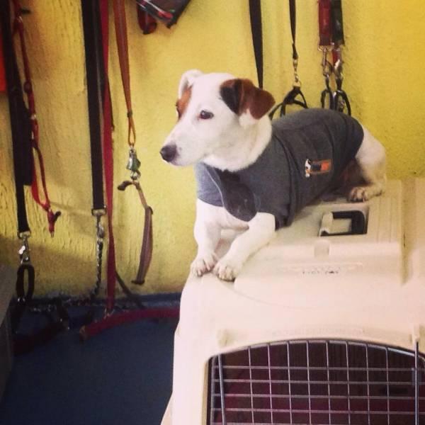 Valor de Adestramento de Cachorro no Jardim Paulistano - Adestramento de Cães Filhotes