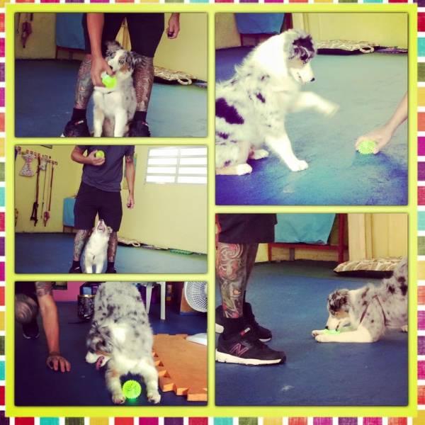 Valor de Adestramento para Cachorro no Jardim Paulistano - Adestramento de Filhotes