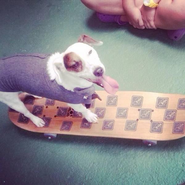Valor de Adestramento para Cães na Vila Mariana - Adestramento Canino