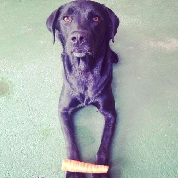 Valor de Adestramento para Cão em Santana de Parnaíba - Adestramento Canino