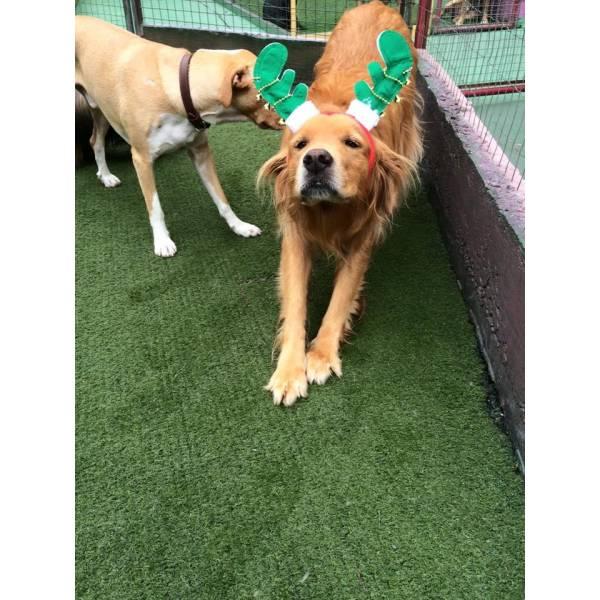 Valor de Daycare de Cão  na Cidade Dutra - Day Care Canino