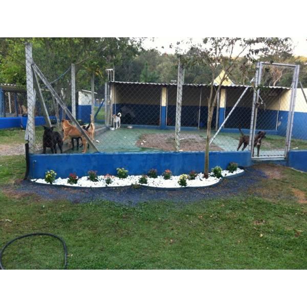 Valor de Hotéis de Cachorros no Jardim Paulistano - Hotel para Cães em SP