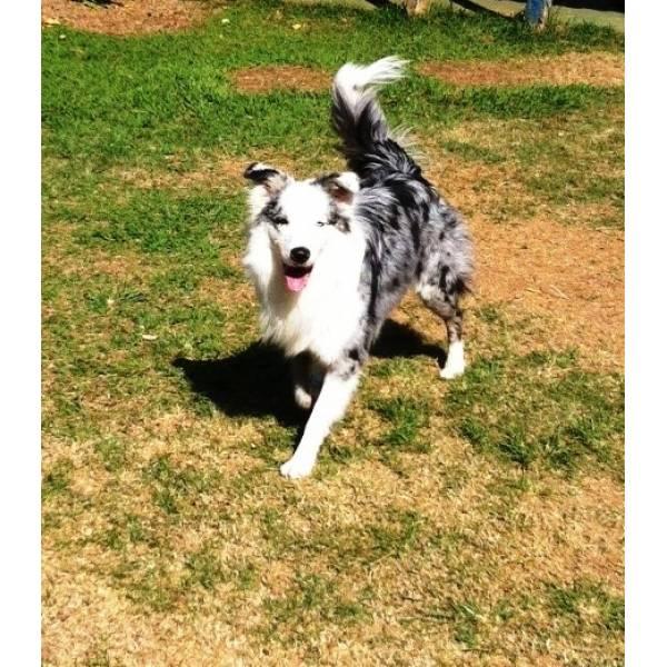Valor de Hotel de Cachorro em Cotia - Hotel para Cães em SP