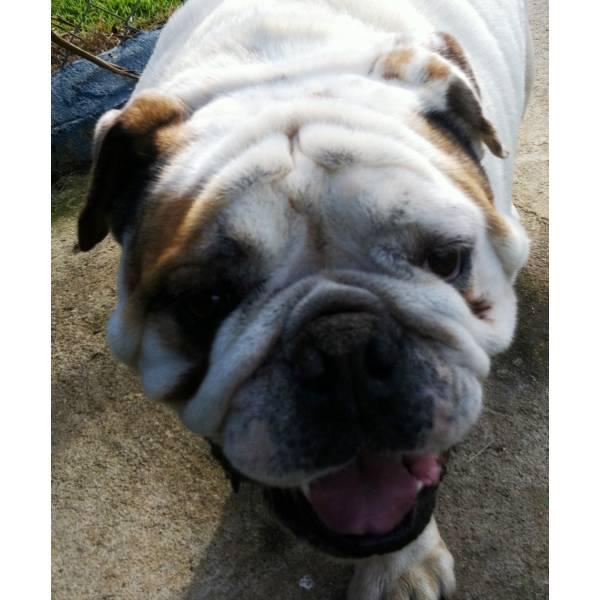 Valor de Hotel de Cachorros no Jabaquara - Hotel para Cães em SP