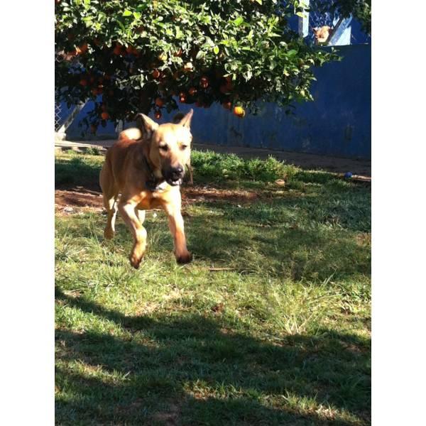 Valor de Hotel para Cão na Vila Sônia - Hotel para Cães em SP