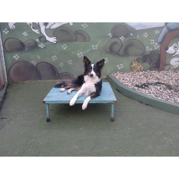 Valores de Adestrador para Cachorro em Sumaré - Adestradores de Cães